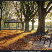St Helena's Park - Dundalk